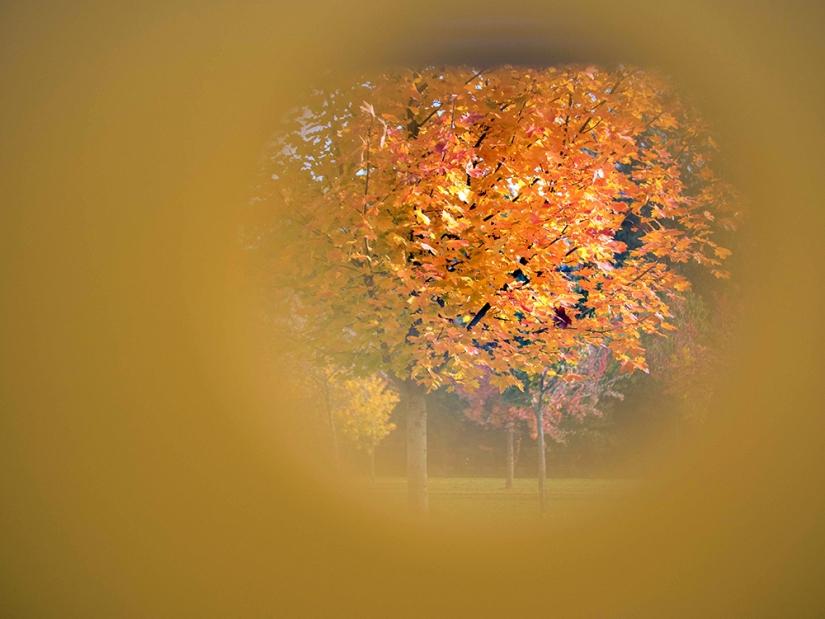 Voir l'automne autrement…