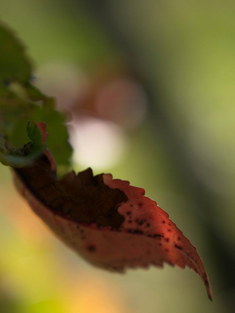 Pigments d'automne