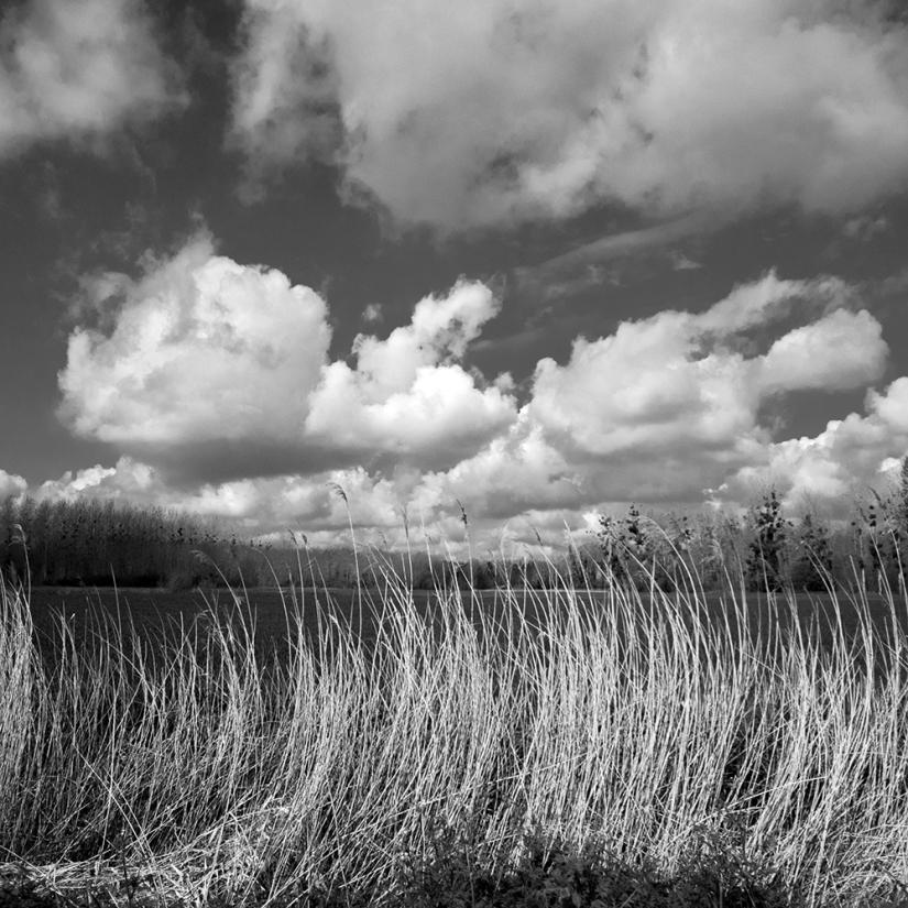 Ruralité : horizons etperspectives