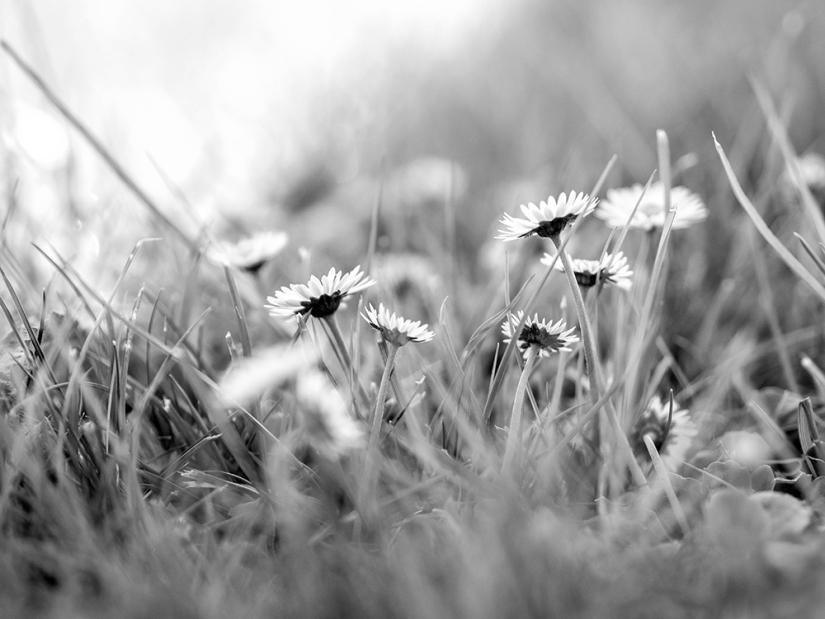 ALJPHOTO «Au fil des saisons» … lasuite