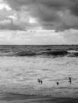 Hors saison : virée sur la côte basque ... qu'il est bon de s'approprier ces lieux qui abondent d'estivants en juillet-août !
