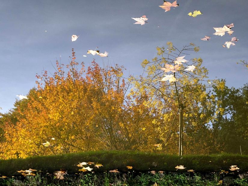 Un automne renversant