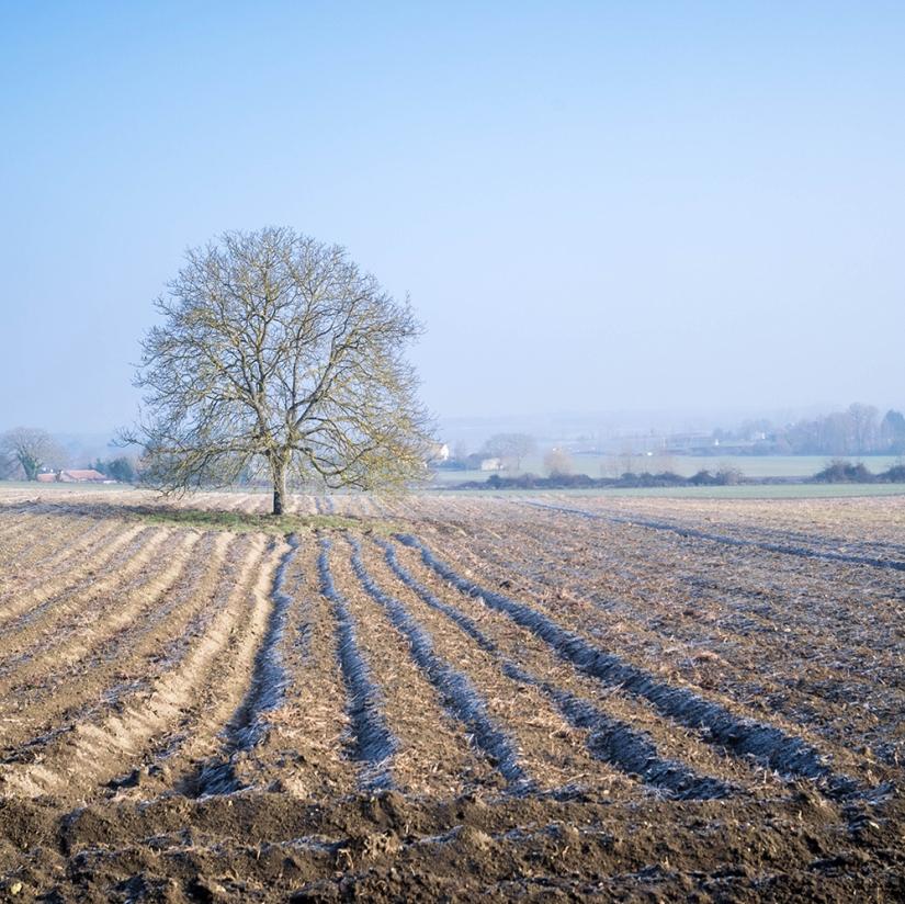 Un hiver endemi-teinte