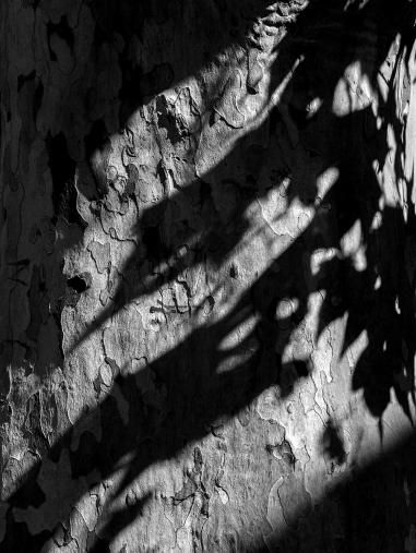 Atmosphère paisible .. les ombres s'allongent et ça devient plus graphique