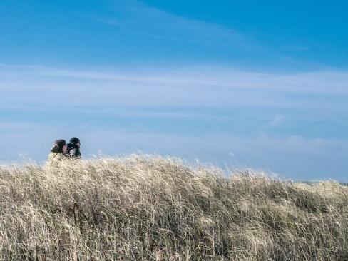 Balade entre les dunes